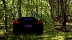 Ferrari 458 in Serenynia Forest